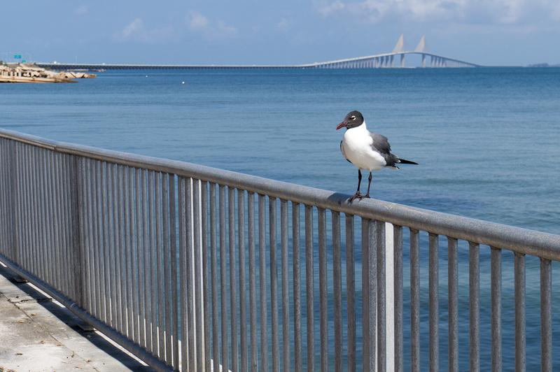 Sunshine Skyway St. Petersburg Florida